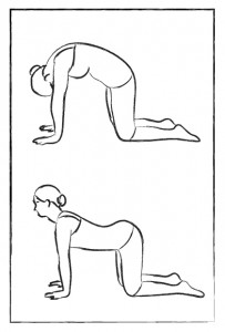 cat cow yoga