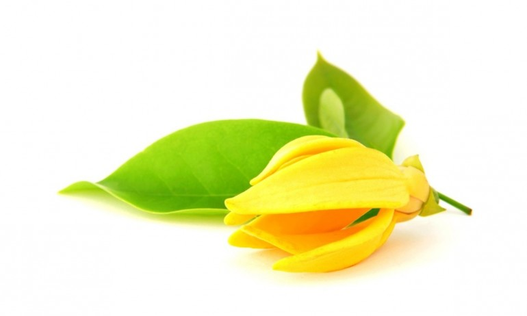 ylang-ylang-essential-oil-group-yoga